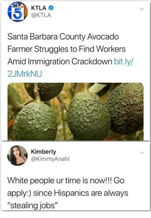 """White People, Avocado, and Immigration: KTLA  @KTLA  Santa Barbara County Avocado  Farmer Struggles to Find Workers  id Immigration Crackdown bit.ly/  2JMrkNU  Kimberly  @KimmyAnahi  White people ur time is now!!! Go  apply:) since Hispanics are always  """"stealing jobs"""""""