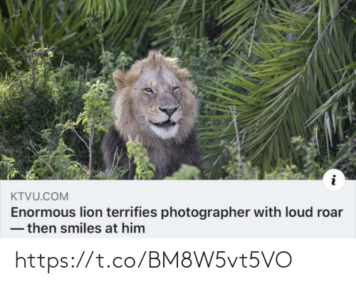 roar: KTVU.COM  Enormous lion terrifies photographer with loud roar  - then smiles at him https://t.co/BM8W5vt5VO