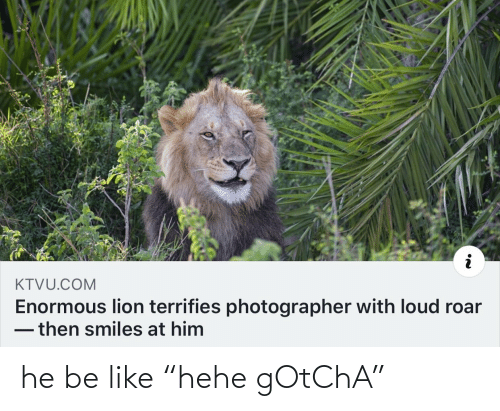 "roar: KTVU.COM  Enormous lion terrifies photographer with loud roar  -then smiles at him he be like ""hehe gOtChA"""