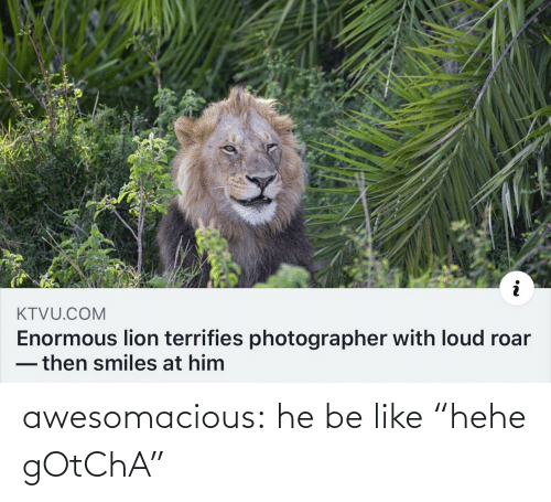 "Be Like, Tumblr, and Blog: KTVU.COM  Enormous lion terrifies photographer with loud roar  -then smiles at him awesomacious:  he be like ""hehe gOtChA"""