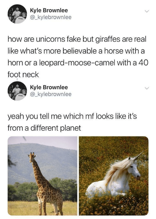 moose: Kyle Brownlee  @_kylebrownlee  STAMA  how are unicorns fake but giraffes are real  like what's more believable a horse with a  horn or a leopard-moose-camel with a 40  foot neck  Kyle Brownlee  @_kylebrownlee  SZAMA  yeah you tell me which mf looks like it's  from a different planet