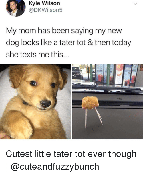 New Dog: Kyle Wilson  @DKWilson5  My mom has been saying my new  dog looks like a tater tot & then today  she texts me this  FAt Cutest little tater tot ever though | @cuteandfuzzybunch