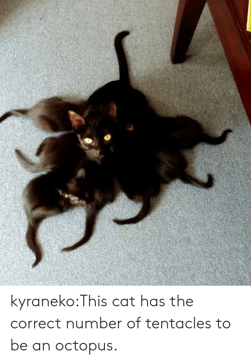 tentacles: kyraneko:This cat has the correct number of tentacles to be an octopus.