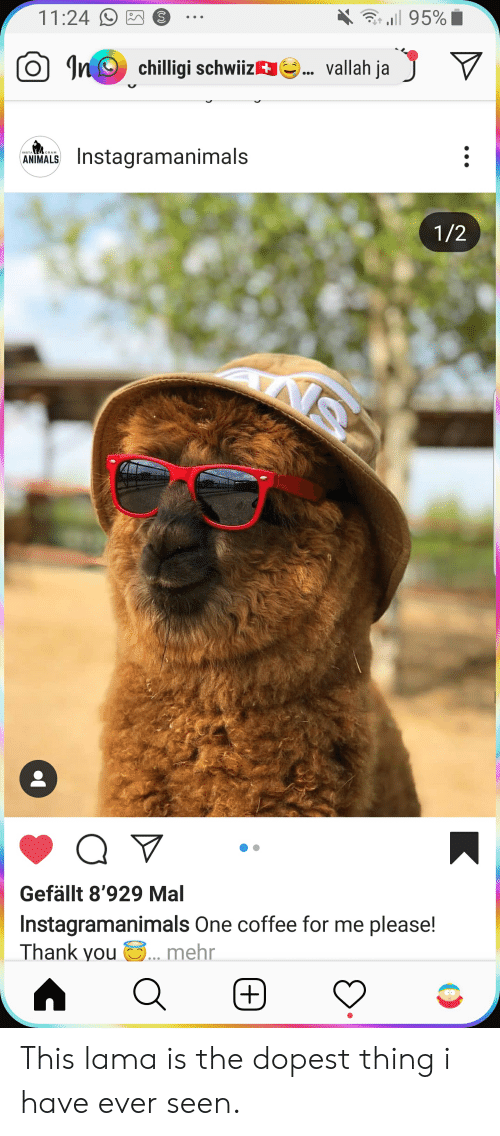 Animals, Thank You, and Coffee: l 95%  11:24  In chilligi schwiiz  vallah ja  Instagramanimals  ANIMALS  1/2  ANS  Q  Gefällt 8'929 Mal  Instagramanimals One coffee for me please!  Thank you  ... mehr  (+) This lama is the dopest thing i have ever seen.