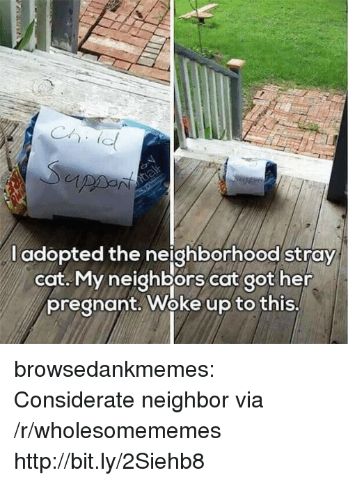Pregnant, Tumblr, and Blog: l adopted the neighborhood stray  cat. My neighbors cat got her  pregnant. Woke up to this, browsedankmemes:  Considerate neighbor via /r/wholesomememes http://bit.ly/2Siehb8