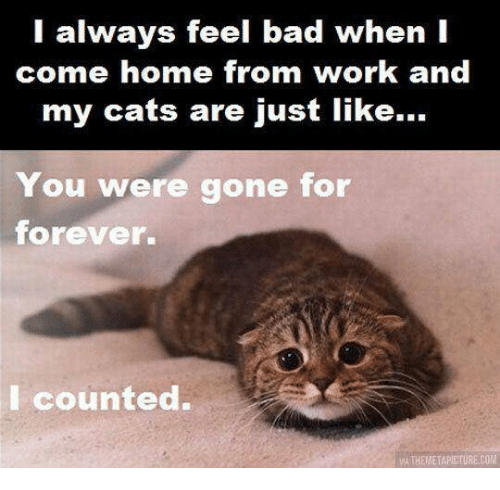Bad, Cats, and Memes: l always feel bad when I  come home from work and  my cats are just like...  You were gone for  forever.  I counted.  VİA THEMETAPICTURE.COM