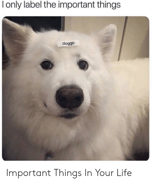 Life, Doggo, and Label: l only label the important things  doggo Important Things In Your Life