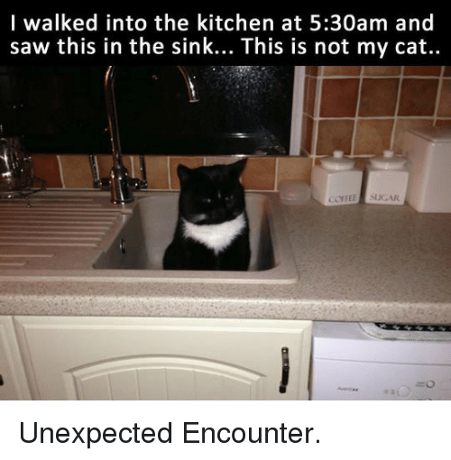 Saw, Sugar, and Cat: l walked into the kitchen at 5:30am and  saw this in the sink... This is not my cat..  COFEE SUGAR <p>Unexpected Encounter.</p>