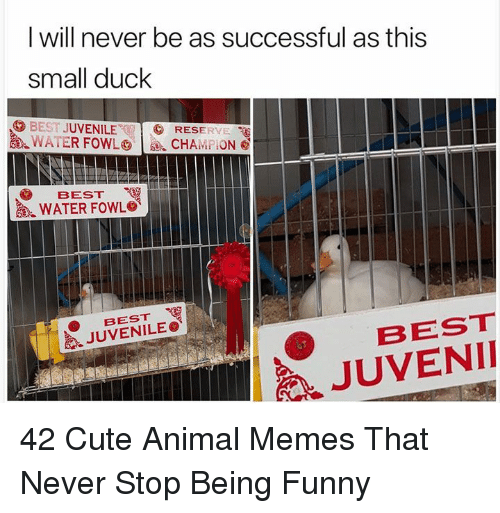 Cute, Funny, and Juvenile: l will never be as successful as this  small duck  BEST JUVENILE  逸.WATER FOWL㊥ | se, cHAni 'On@  RESERYE  BEST  WATER FOWL。  BEST  JUVENILE。《  BEST  JUVENII 42 Cute Animal Memes That Never Stop Being Funny