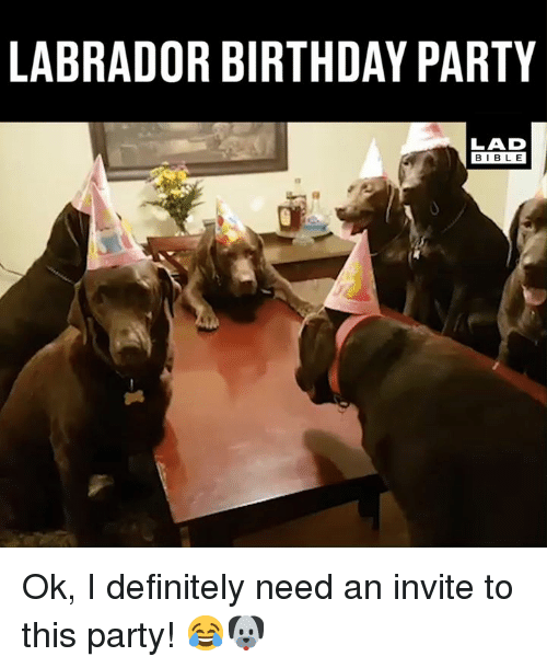labrador: LABRADOR BIRTHDAY PARTY  LAD  BIBLE Ok, I definitely need an invite to this party! 😂🐶
