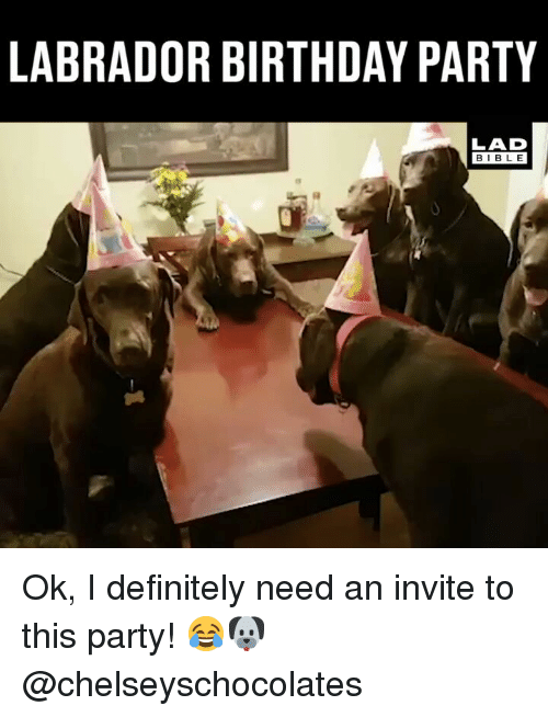 labrador: LABRADOR BIRTHDAY PARTY  LAD  BIBLE Ok, I definitely need an invite to this party! 😂🐶 @chelseyschocolates