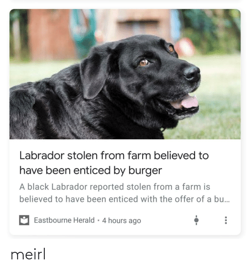Reported: Labrador stolen from farm believed to  have been enticed by burger  A black Labrador reported stolen from a farm is  believed to have been enticed with the offer of a bu..  Eastbourne Herald • 4 hours ago meirl