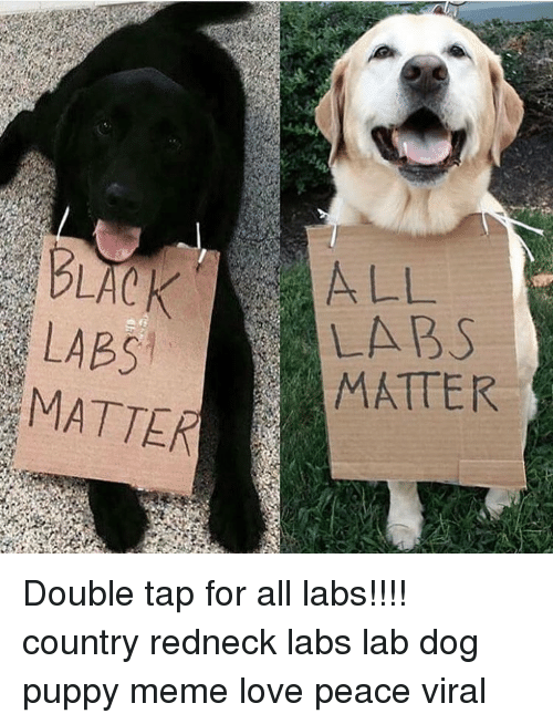 Love, Meme, and Memes: LABS  MATTER  LABS  MATTER Double tap for all labs!!!! country redneck labs lab dog puppy meme love peace viral