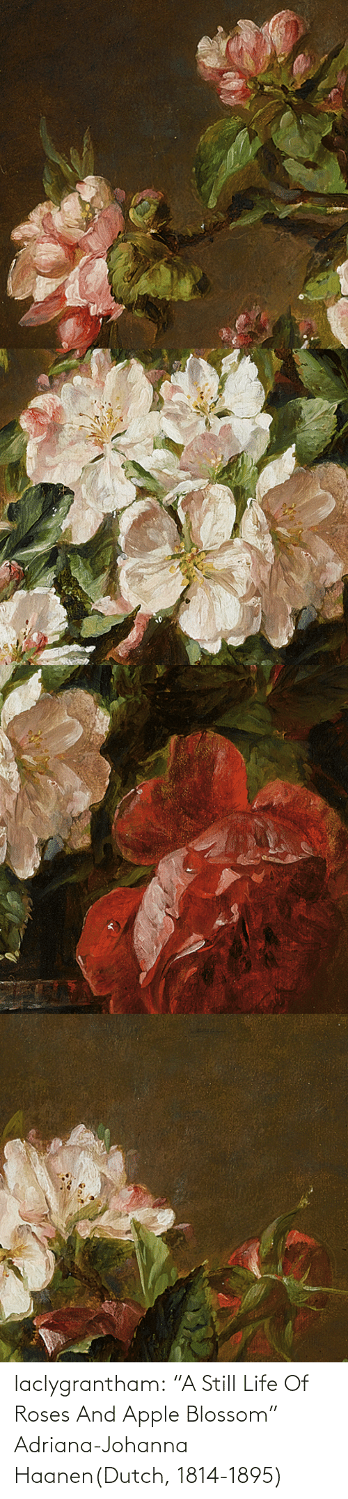 "Apple: laclygrantham:  ""A Still Life Of Roses And Apple Blossom"" Adriana-Johanna Haanen(Dutch, 1814-1895)"