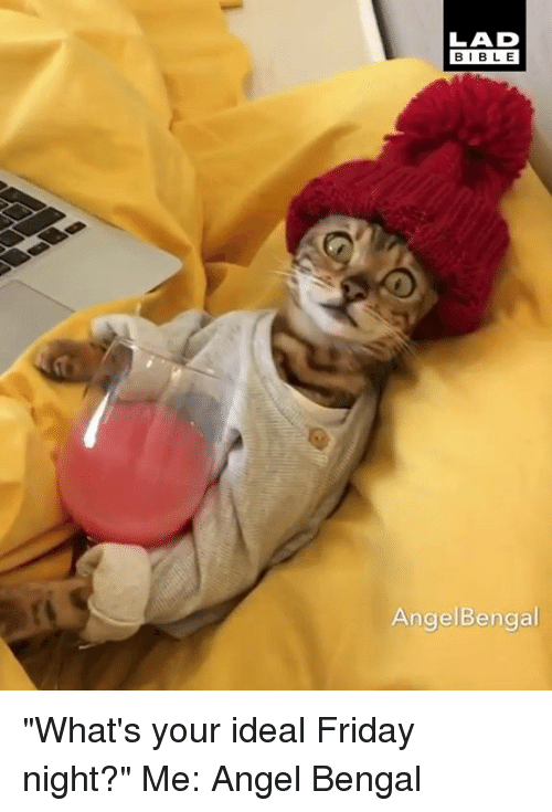 "Dank, Friday, and Angel: LAD  BIBL E  AngelBengal ""What's your ideal Friday night?"" Me:  Angel Bengal"