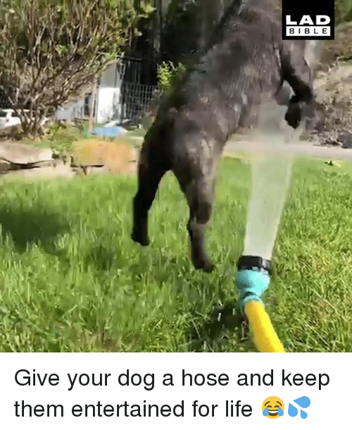 Dank, Life, and 🤖: LAD  BIBL E Give your dog a hose and keep them entertained for life 😂💦