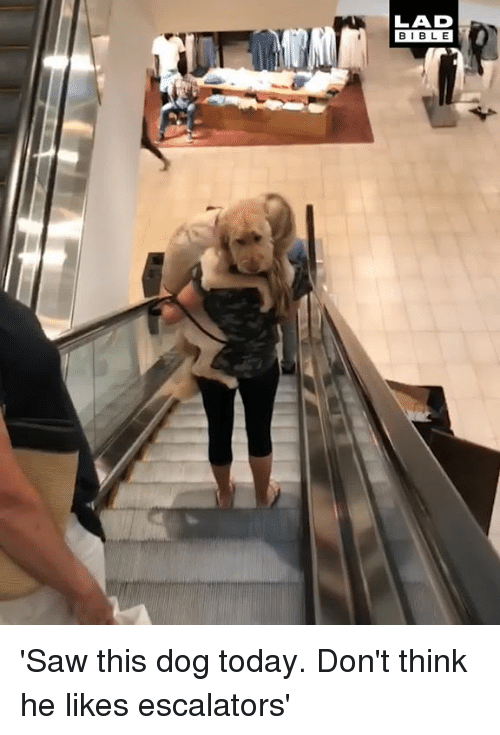 Dank, Saw, and Today: LAD  BIBL E 'Saw this dog today. Don't think he likes escalators'