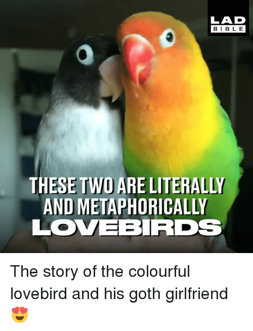 Dank, Girlfriend, and 🤖: LAD  BIBL E  THESE TWO ARE LITERALLY  AND METAPHORICALLY  LOVEBRDs The story of the colourful lovebird and his goth girlfriend 😍