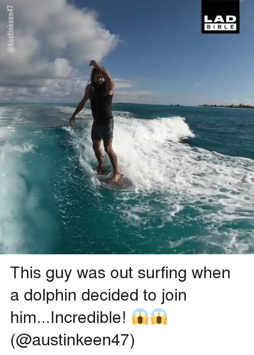 Memes, Dolphin, and 🤖: LAD  BIBL E This guy was out surfing when a dolphin decided to join him...Incredible! 😱😱 (@austinkeen47)