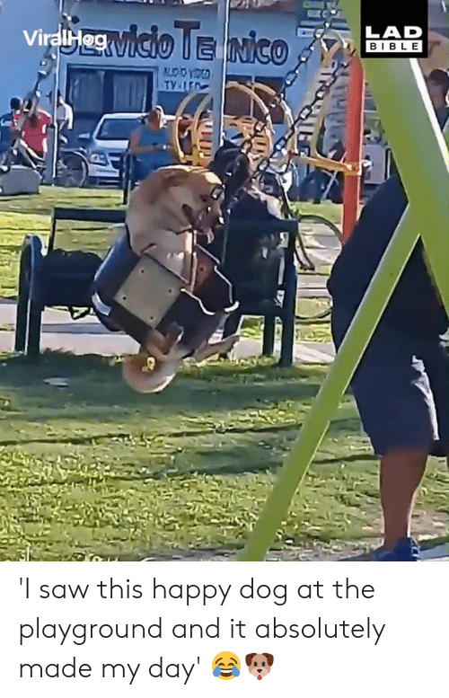 Playground: LAD  BIBL E  ViralH 'I saw this happy dog at the playground and it absolutely made my day' 😂🐶