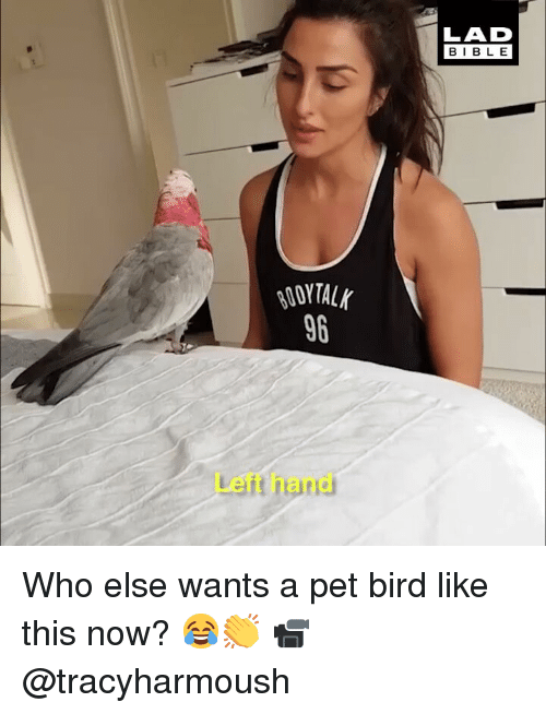 Memes, Bible, and 🤖: LAD  BIBLE  96  Left hand Who else wants a pet bird like this now? 😂👏 📹 @tracyharmoush
