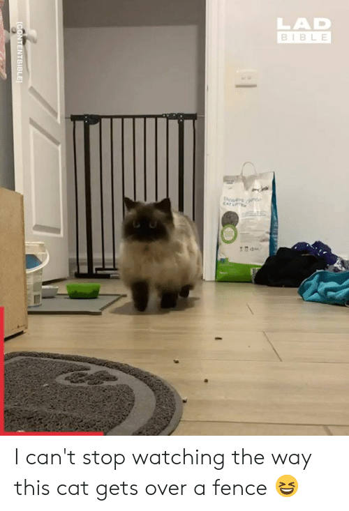 Dank, Lit, and Bible: LAD  BIBLE  CAT LIT  CONTENTBIBLE I can't stop watching the way this cat gets over a fence 😆