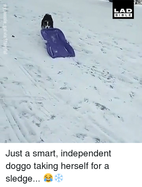 Dank, Bible, and 🤖: LAD  BIBLE  CD Just a smart, independent doggo taking herself for a sledge... 😂❄️