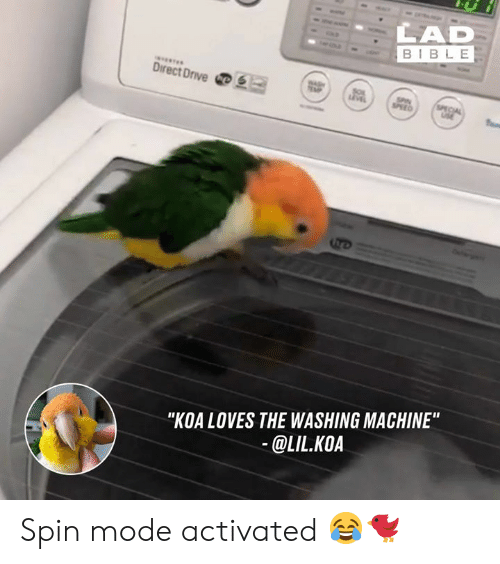 "Dank, Bible, and 🤖: LAD  BIBLE  DirectDrive四  ""KOA LOVES THE WASHING MACHINE  @LIL.KOA Spin mode activated 😂🐦"