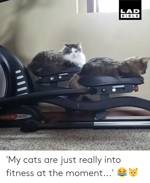 Cats, Dank, and Bible: LAD  BIBLE  E35 'My cats are just really into fitness at the moment...' 😂🐱