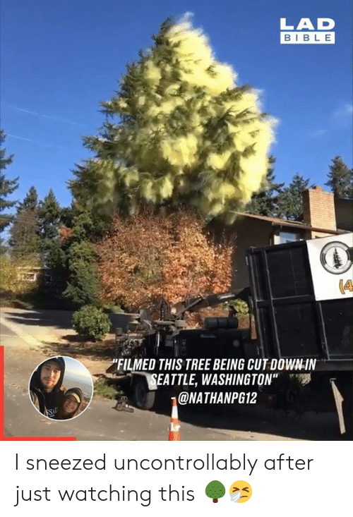 """Just Watching: LAD  BIBLE  """"FILMED THIS TREE BEING CUT DOWN-IN  SEATTLE, WASHINGTON""""  @NATHANPG12  SAD I sneezed uncontrollably after just watching this 🌳🤧"""