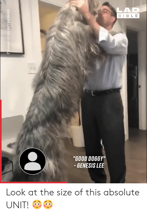 """doggy: LAD  BIBLE  """"GOOD DOGGY""""  - GENESIS LEE  [GENESIS LEE VIA STORYFUL Look at the size of this absolute UNIT! 😳😳"""