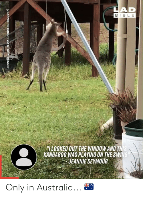 "swing: LAD  BIBLE  ""ILOOKED OUT THE WINDOW AND THIS  KANGAROO WAS PLAYING ON THE SWING  JEANNIE SEYMOUR  [JEANNIE SEYMOUR VIA STORYTRENDER]T Only in Australia... 🇦🇺"