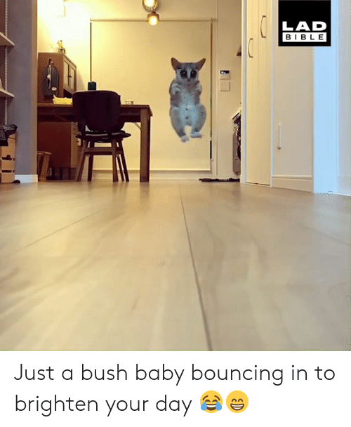 Dank, Bible, and Baby: LAD  BIBLE Just a bush baby bouncing in to brighten your day 😂😁