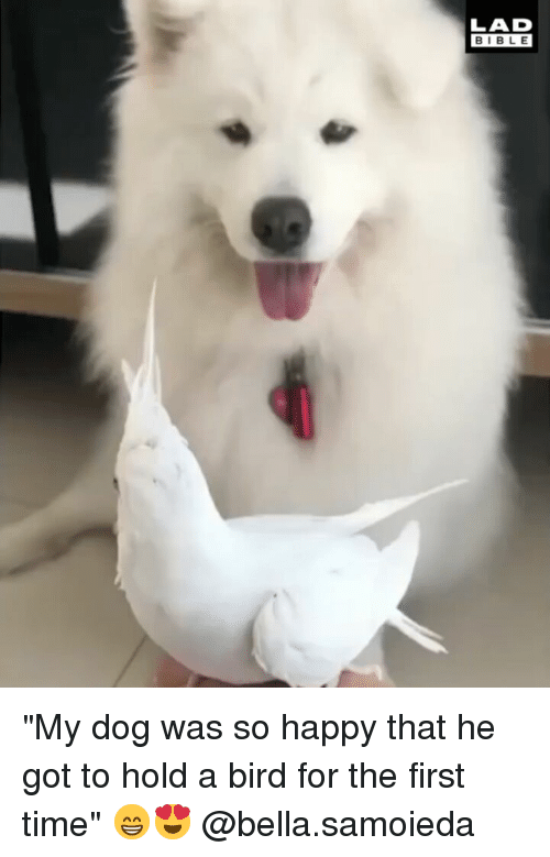 "Memes, Bible, and Happy: LAD  BIBLE ""My dog was so happy that he got to hold a bird for the first time"" 😁😍 @bella.samoieda"