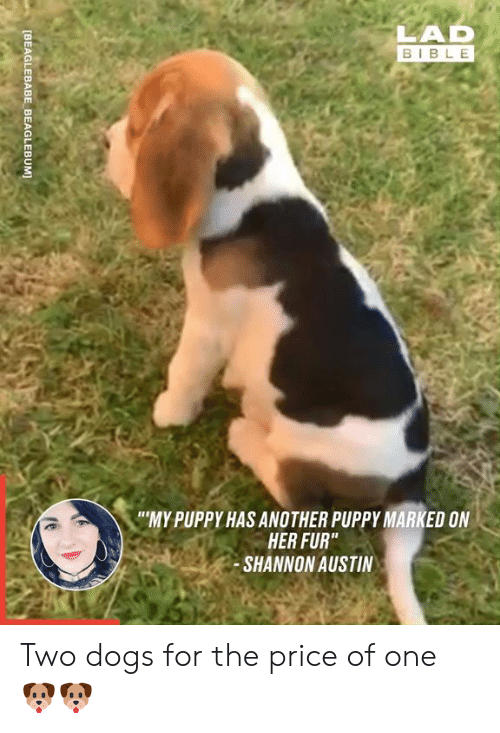 """Dank, Dogs, and Bible: LAD  BIBLE  """"MY PUPPY HAS ANOTHER PUPPY MARKED ON  HER FUR""""  SHANNON AUSTIN  [BEAGLEBABE BEAGLEBUM] Two dogs for the price of one 🐶🐶"""