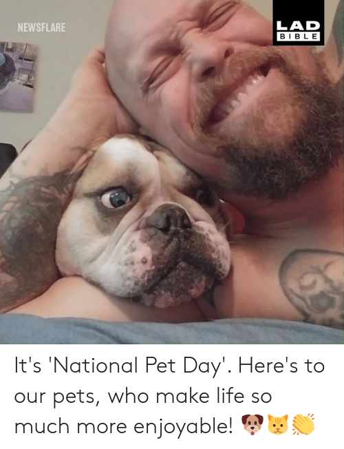 Dank, Life, and Bible: LAD  BIBLE  NEWSFLARE It's 'National Pet Day'. Here's to our pets, who make life so much more enjoyable! 🐶🐱👏