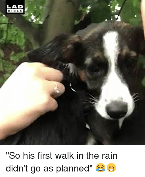 """Memes, Bible, and Rain: LAD  BIBLE """"So his first walk in the rain didn't go as planned"""" 😂😁"""