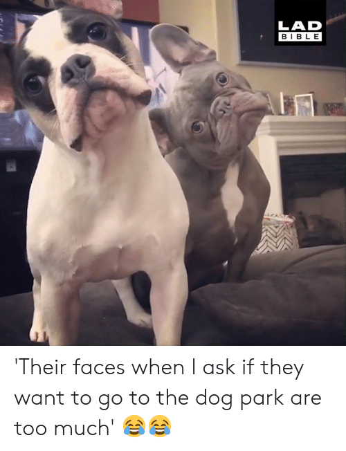 Dog Park: LAD  BIBLE 'Their faces when I ask if they want to go to the dog park are too much' 😂😂