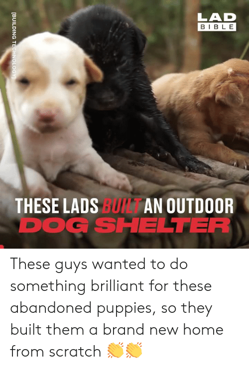 Dank, Puppies, and Bible: LAD  BIBLE  THESE LADS BUI AN OUTDOOR  DOG SHELTER  [BUILDING TECHNOLOGY These guys wanted to do something brilliant for these abandoned puppies, so they built them a brand new home from scratch 👏👏