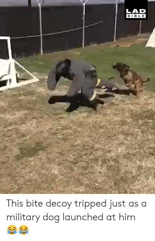 tripped: LAD  BIBLE This bite decoy tripped just as a military dog launched at him 😂😂