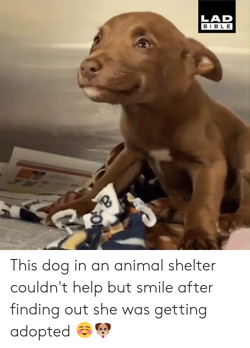 Dank, Animal, and Animal Shelter: LAD  BIBLE This dog in an animal shelter couldn't help but smile after finding out she was getting adopted ☺️🐶