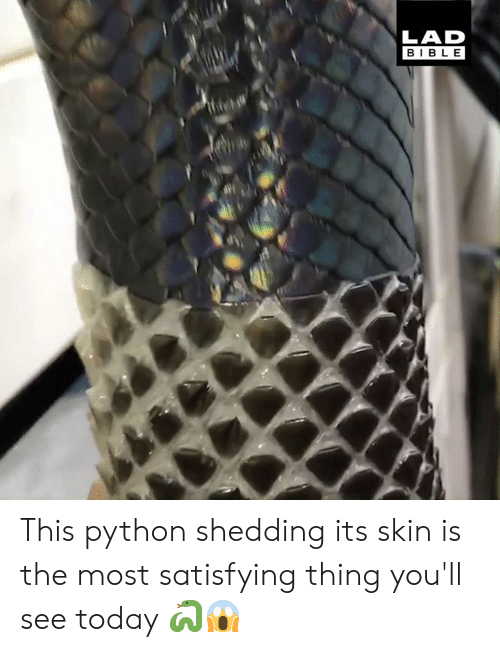 Dank, Bible, and Today: LAD  BIBLE This python shedding its skin is the most satisfying thing you'll see today 🐍😱
