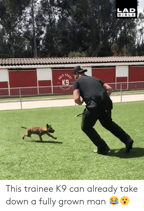Dank, Bible, and 🤖: LAD  BIBLE This trainee K9 can already take down a fully grown man 😂😮