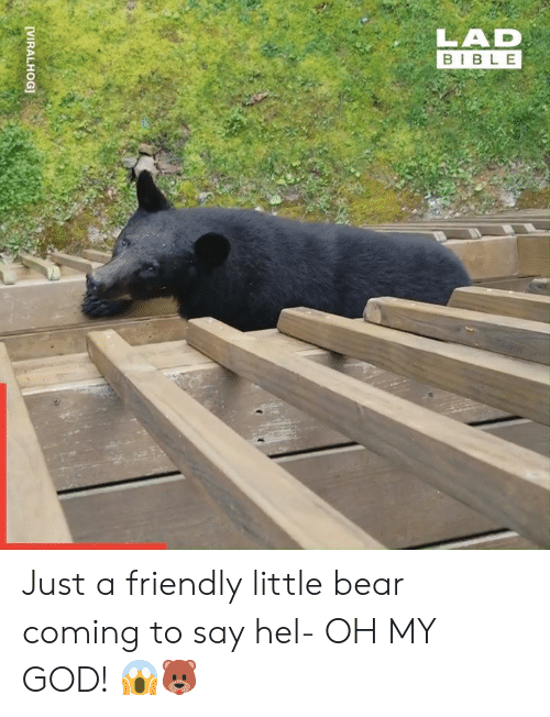 Dank, God, and Oh My God: LAD  BIBLE  [VIRALHOG] Just a friendly little bear coming to say hel- OH MY GOD! 😱🐻