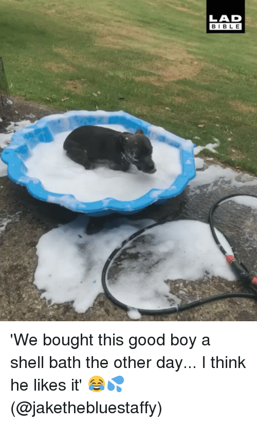 He Likes It: LAD  BIBLE 'We bought this good boy a shell bath the other day... I think he likes it' 😂💦 (@jakethebluestaffy)