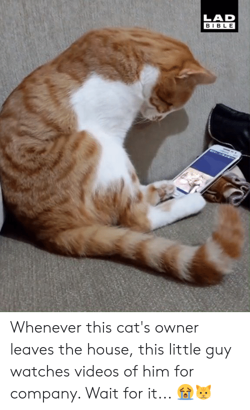 Cats, Dank, and Videos: LAD  BIBLE Whenever this cat's owner leaves the house, this little guy watches videos of him for company. Wait for it... 😭🐱
