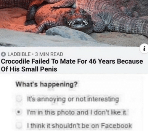 i dont like it: LADBIBLE 3 MIN READ  Crocodile Failed To Mate For 46 Years Because  Of His Small Penis  What's happening?  It's annoying or not interesting  I'm in this photo and I don't like it  I think it shouldn't be on Facebook