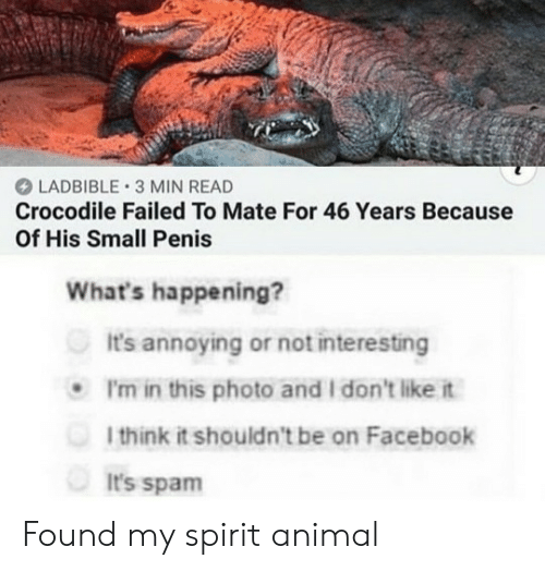 mate: LADBIBLE 3 MIN READ  Crocodile Failed To Mate For 46 Years Because  Of His Small Penis  What's happening?  It's annoying or not interesting  P'm in this photo and I don't like it  1think it shouldn't be on Facebook  It's spam Found my spirit animal