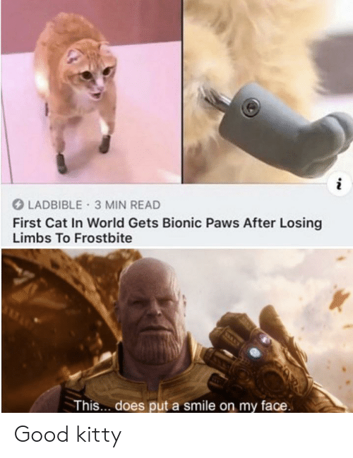 Paws: LADBIBLE 3 MIN READ  First Cat In World Gets Bionic Paws After Losing  Limbs To Frostbite  This... does put a smile on my face. Good kitty