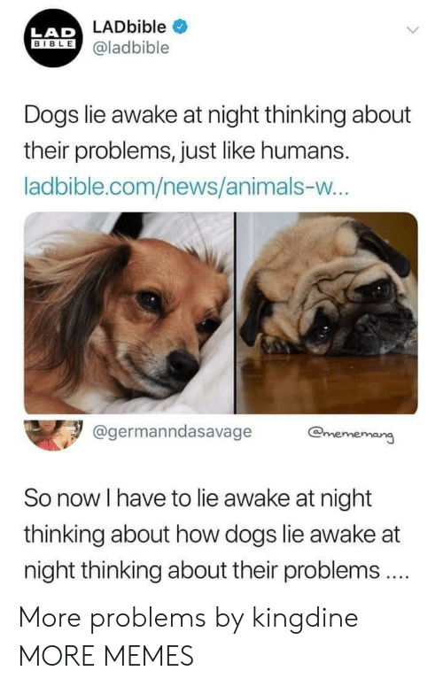 Animals, Dank, and Dogs: LADbible  BIBLE@ladbible  LAD  Dogs lie awake at night thinking about  their problems, just like humans.  ladbible.com/news/animals-vw  age  @germanndasavage  emememang  So now I have to lie awake at night  thinking about how dogs lie awake at  night thinking about their problems More problems by kingdine MORE MEMES